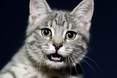 kota kaganiec s zdjęcia royalty free