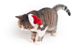 kota kapelusz Santa zdjęcia stock