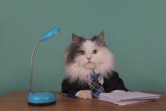 Kota kierownik w kostiumu obsiadaniu w biurze Zdjęcie Royalty Free