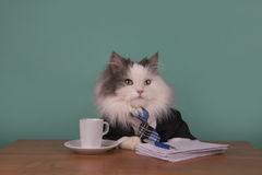 Kota kierownik w kostiumu obsiadaniu w biurze Zdjęcia Royalty Free