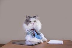 Kota kierownik w kostiumu obsiadaniu w biurze Zdjęcie Stock