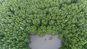 Kota Kinabalu Wetland Centre image libre de droits