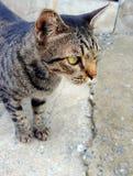 kota kot zdjęcie stock