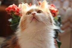 kota kwiat?w menchie zdjęcie royalty free