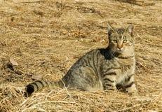 kota mimetyzm Zdjęcie Stock