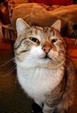 kota mrugnięcie s Zdjęcia Stock