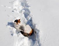 kota śnieg fotografia stock