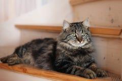 kota obsiadanie Obraz Royalty Free