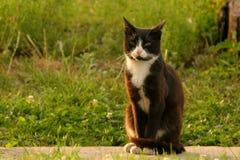 kota obsiadanie Obraz Stock