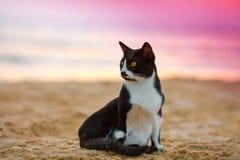 Kota obsiadanie na plaży Fotografia Royalty Free