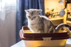 Kota obsiadanie w kot ściółki tacy lub pudełku obraz royalty free