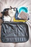 Kota obsiadanie w walizce zdjęcie royalty free