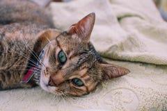 kota oczu zieleń Obraz Stock