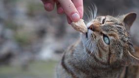 kota oczu zieleń Fotografia Stock