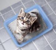 Kota odgórnego widoku obsiadanie w ściółki pudełku na łazienki podłoga obrazy royalty free