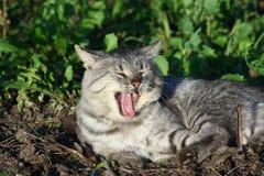 kota odpoczynek Obrazy Stock