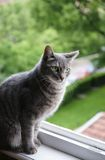 kota oka zieleń Obrazy Stock