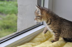 kota okno Zdjęcie Stock