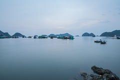 Kota półdupków wyspa Zdjęcia Royalty Free