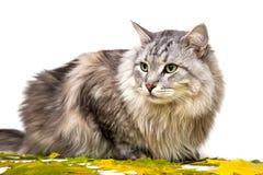 kota patrzeć w górę Zdjęcie Royalty Free
