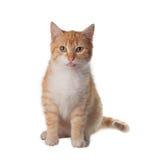 kota patrzeć w górę Fotografia Royalty Free