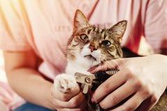 Kota pazura opieka, odcina kotów pazury obraz royalty free