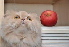 kota pers zdjęcie stock