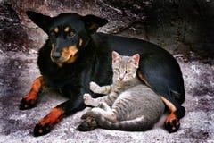kota pies Zdjęcia Royalty Free
