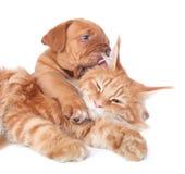 kota pies Obraz Stock