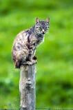 kota poczta obsiadanie Zdjęcia Royalty Free