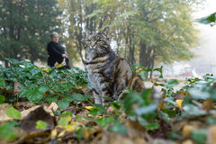 Kota polowanie w miasto parku Zdjęcia Stock