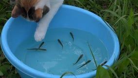 Kota pomyślny połów w błękitnym pucharze z wiele mała ryba zbiory wideo