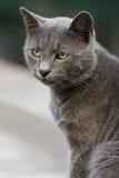 kota portret zdjęcie stock