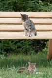 Kota portret, kotów interesy Obrazy Royalty Free