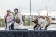 2019 kota Przybłąkanego fotografa nowa fotografia, śliczni uliczni koty w ulicie obrazy royalty free