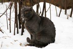 kota sadła grey fotografia stock