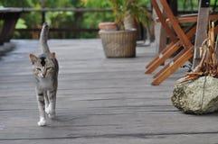 kota spacer przy wybiegiem zdjęcie stock
