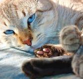 kota spojrzenie zdjęcie royalty free