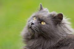 kota spojrzenie Obraz Stock