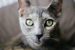 kota spojrzenie Zdjęcia Royalty Free