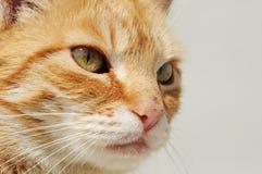 kota spojrzenie Obrazy Royalty Free