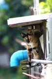 kota spojrzenie Zdjęcia Stock