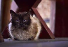 kota spojrzenie Obraz Royalty Free
