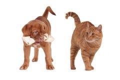 kota szczeniak Fotografia Stock