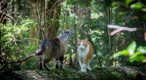 2 kota w lesie zdjęcia royalty free