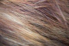 Kota włosy Zdjęcia Stock