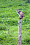 kota wierzchołek Zdjęcia Stock