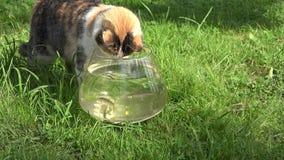 Kota zegarka blisko szklany akwarium z ryba w zieleń ogródzie 4K zbiory wideo