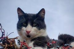 kota zwierzęcia domowego cukierki Fotografia Royalty Free