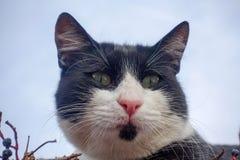 kota zwierzęcia domowego cukierki Zdjęcia Royalty Free